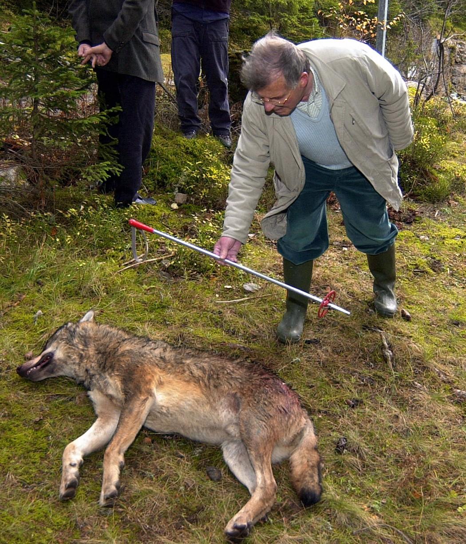 Wolf von Polizist getötet - Jäger