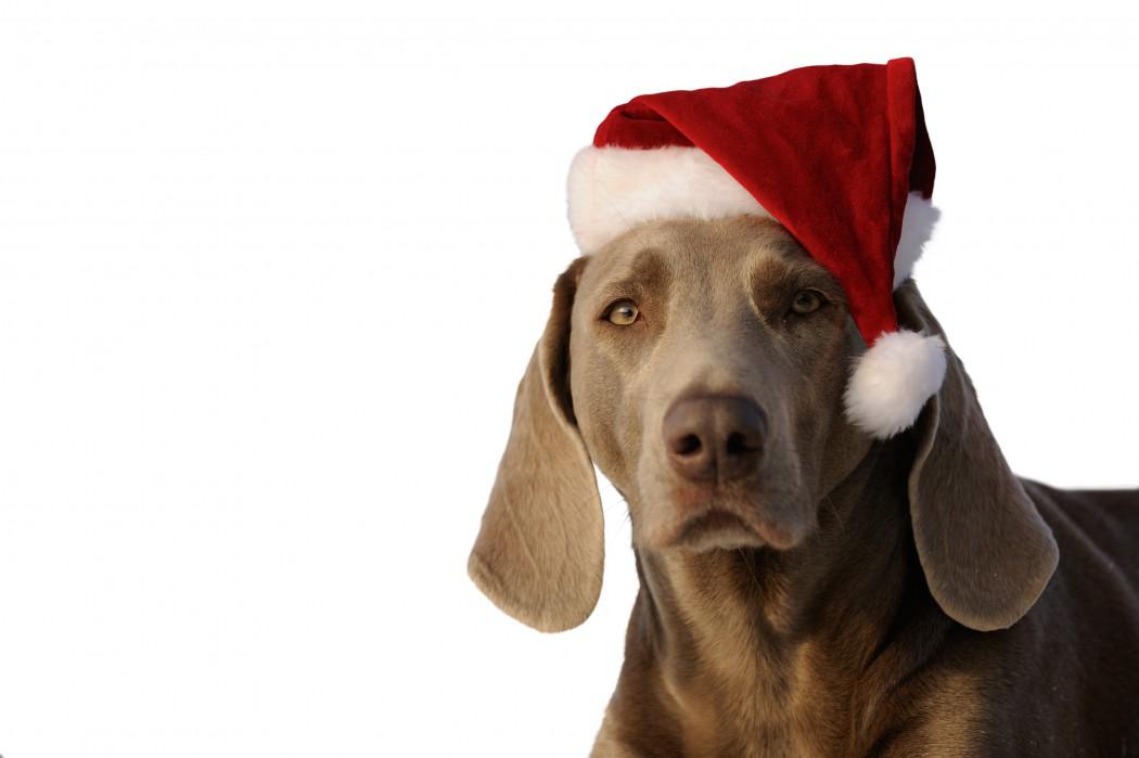 Frohe Weihnachten Jager.Frohe Weihnachten Jager