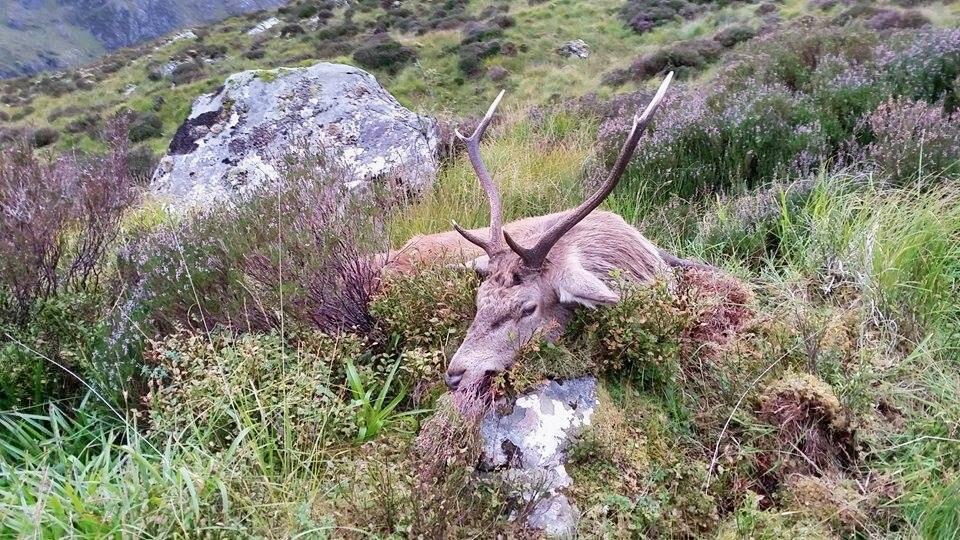 Pauls erster schottischer Hirsch ©Wilddiebe
