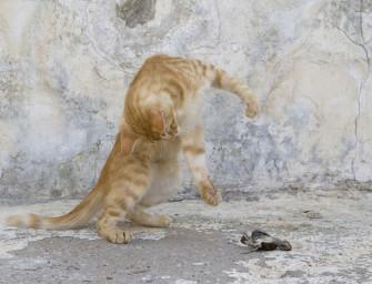 Laut BMEL-Tierschutzbericht 2015 immer mehr verwilderte Katzen