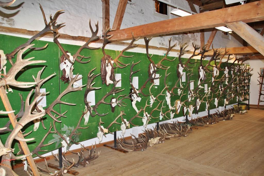 Toll – die Abwurfreihen der reifen Hirsche!