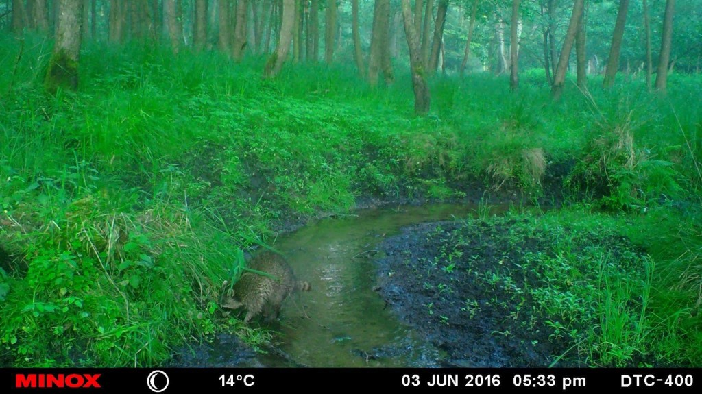 Wilddiebe Wildkamera Minox Revier Wild Jagd Jaegermagazin