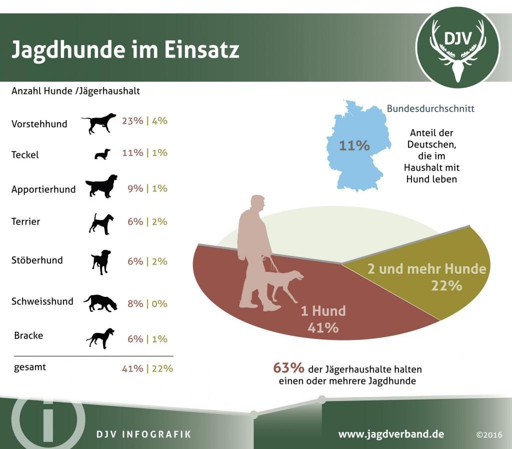 Wie viele Jagdhunde haben Jäger? (Quelle: DJV)