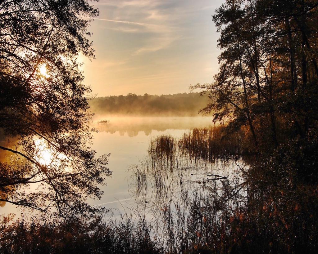 Jagd auf Rothirsche in Polen mit Jagdreisen Schrum