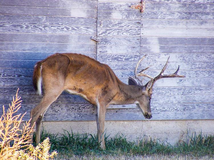 17-CWD-Mike-Hopper,-Kansas-Dept.-of-Wildlife,-Parks-and-TourismCMYK_0