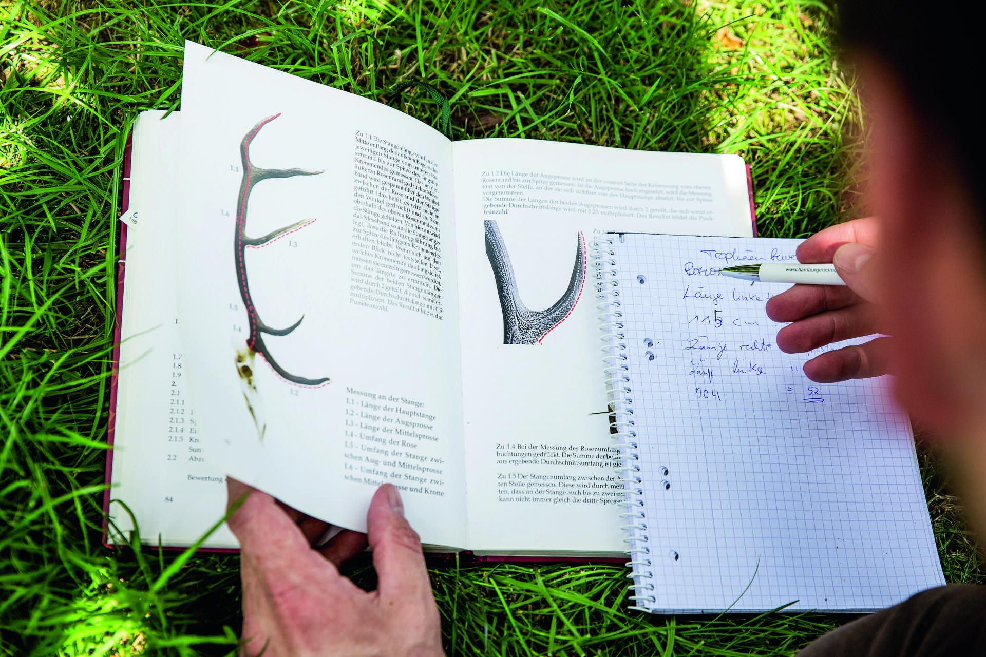 9_Zusammenrechnen jaegermagazin Trophäen Rothirsch auspunkten CIC