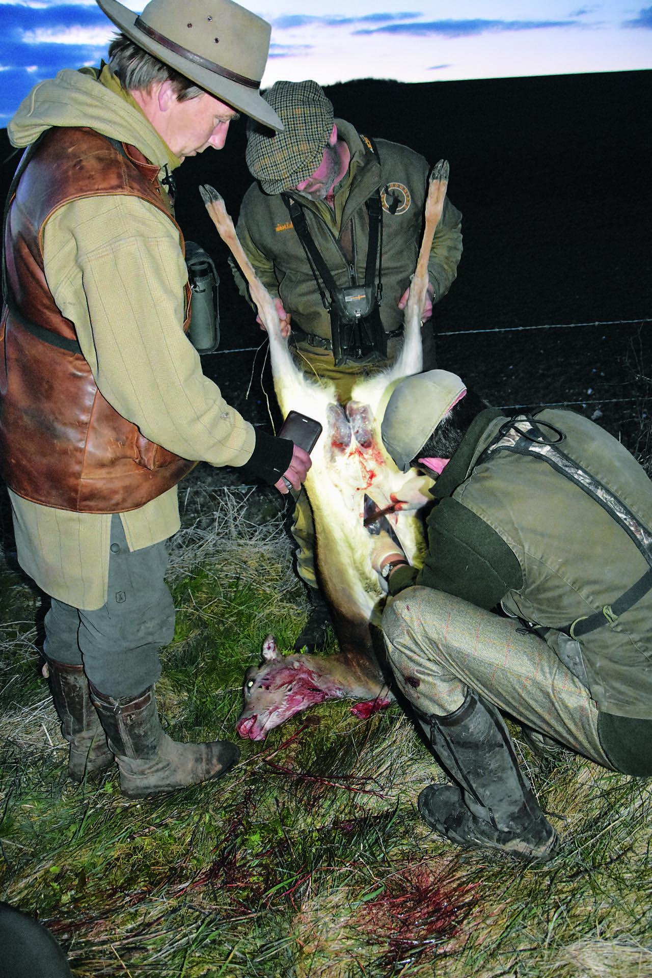 Aufbrechen jaegermagazin jagd Mike Robinson jagen Damwild Wildbret