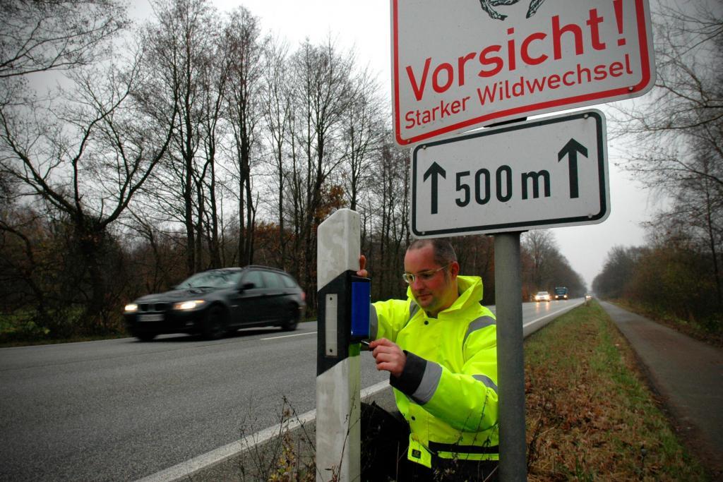 Reh hinter Leitplanke jaegermagazin jagd unfall wildunfall verkehr DJV