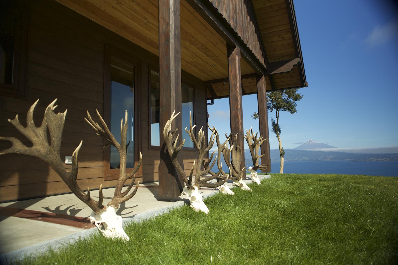 Kapital und hochinteressant: die besseren Hirsche der Rotwildbrunft 2016 aus dem Revier Rupanquito. ©Lucy Martens