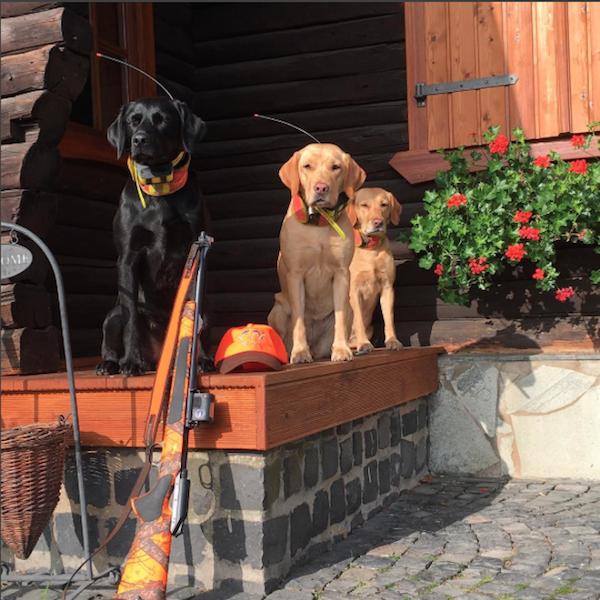 Hunde jaegermagazin jagdschule göttingen