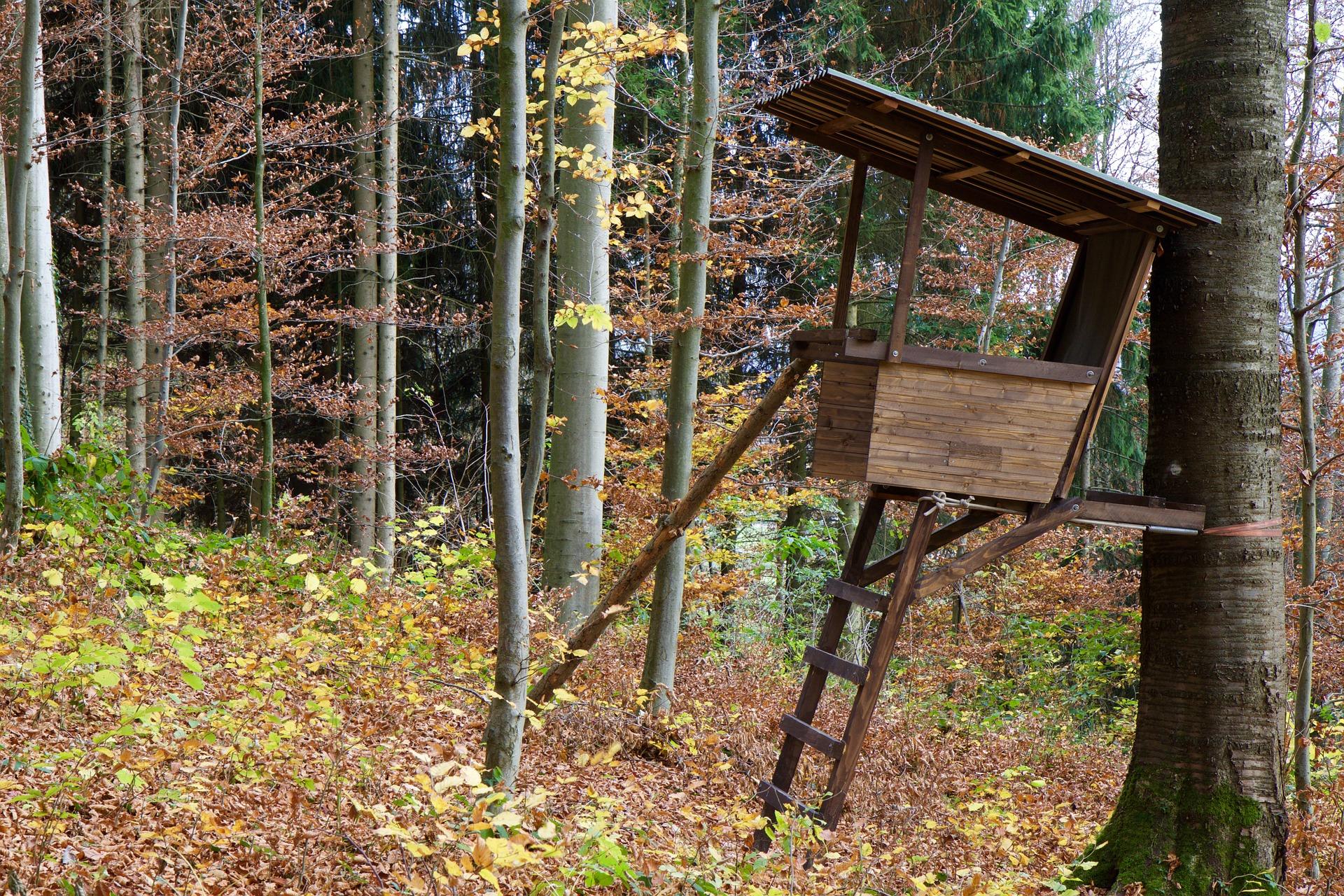 Ansitz Fotowettbewerb Wir Suchen Die Verr 252 Ckteste Sauen