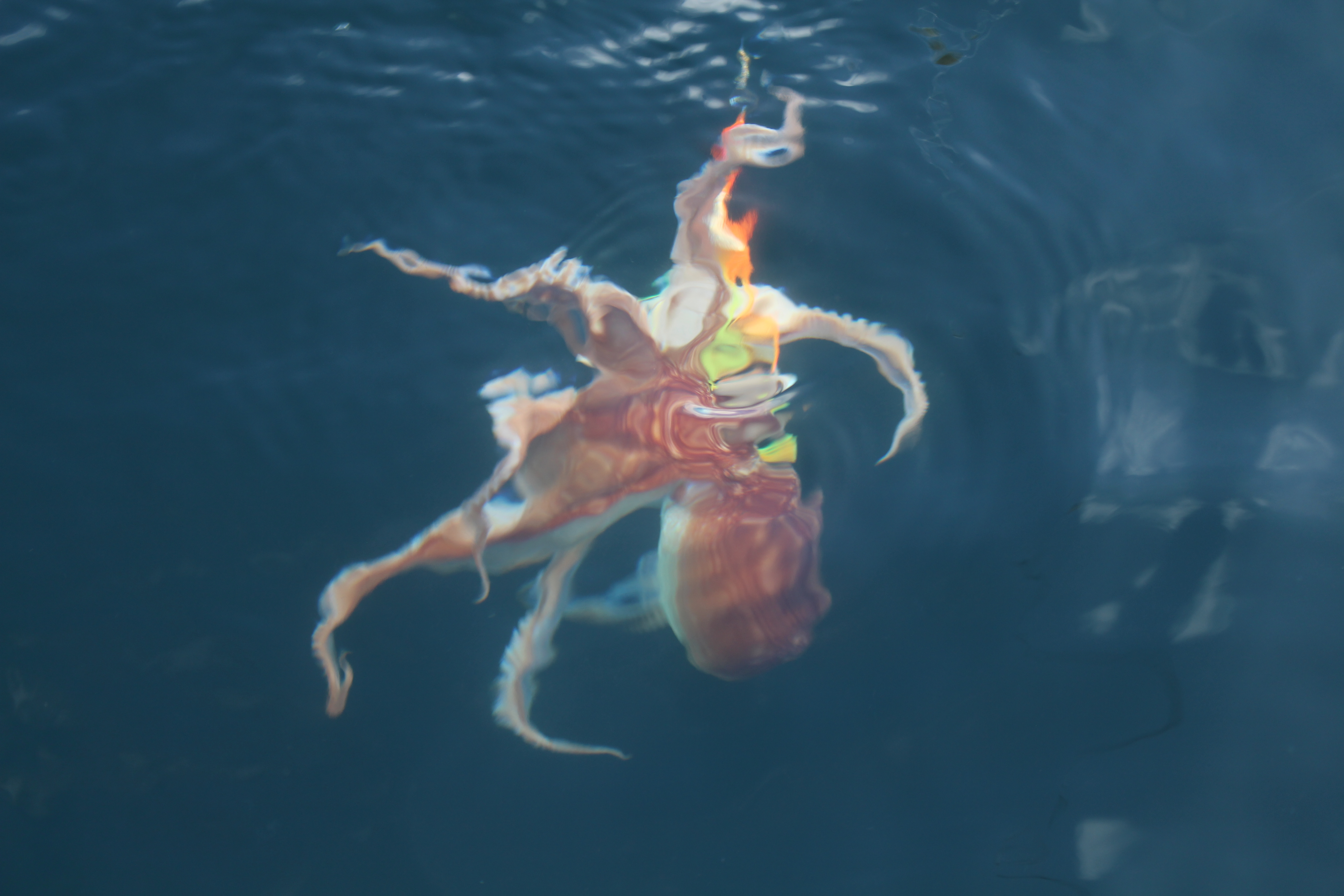 ein Oktopus kurz vor der Landung jaegermagazin Wilddiebe Angeln in Norwegen