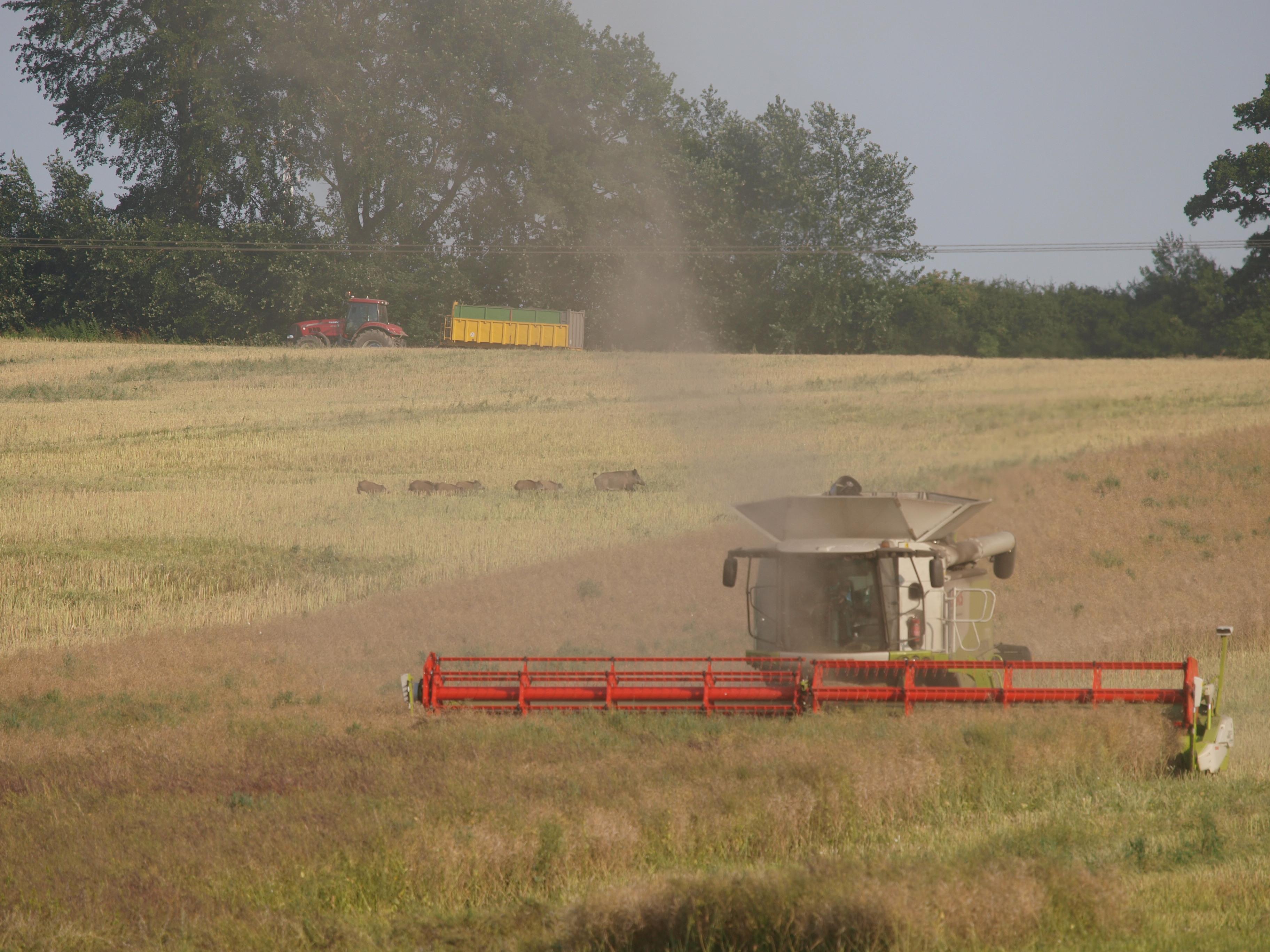 DJV-Tipps zur Sicherheit bei der Erntejagd