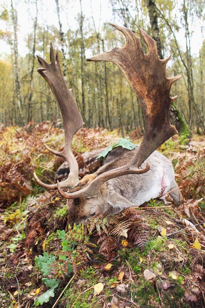 3-burhenne-21.10.2016-2-jagd-jagen-jaeger-jaegermagazin-wilddiebe-damwildbrunft-damhirsch