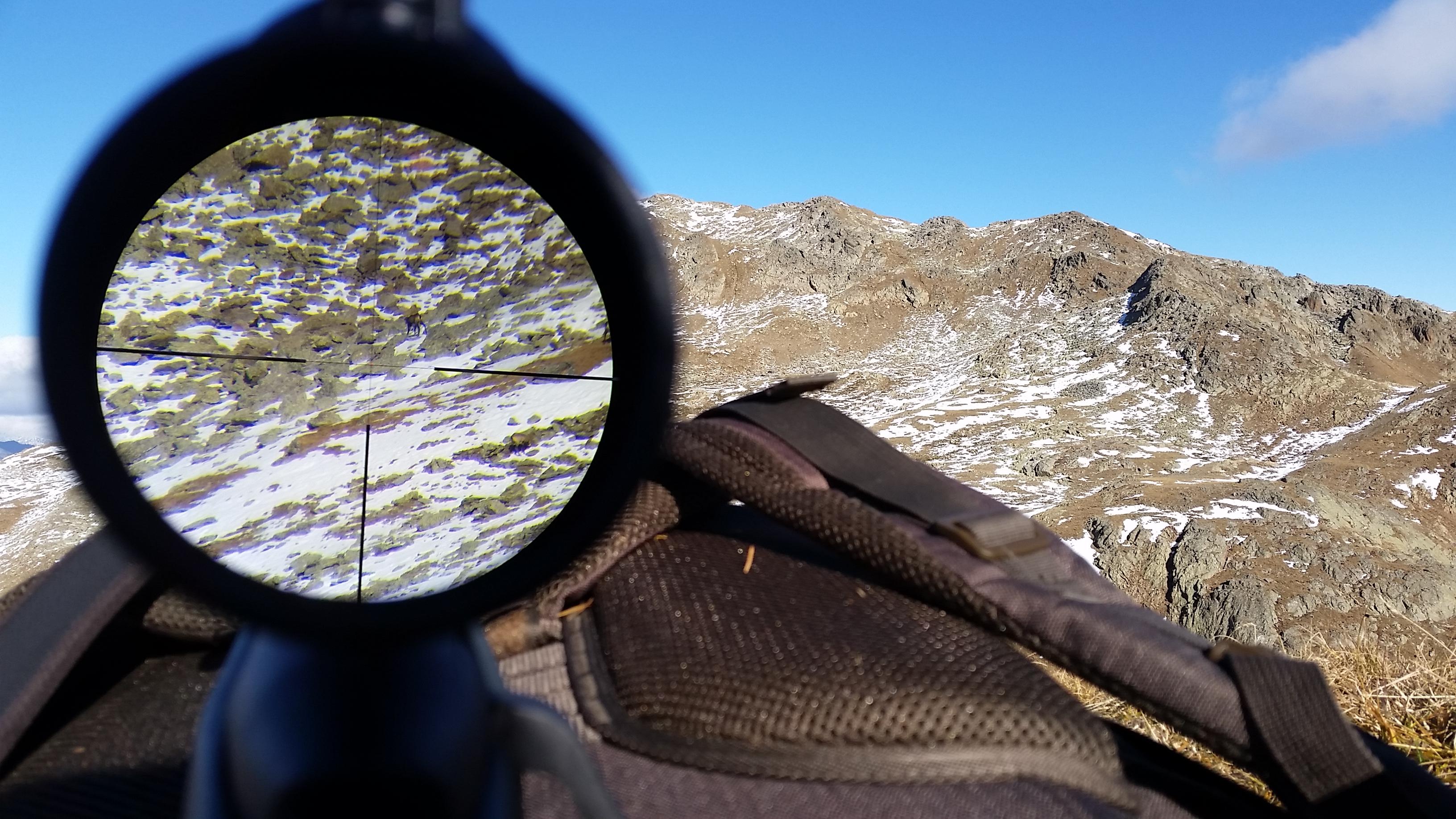 Gamswild auf 600m Jagd jagen jäger jaegermagazin Gamsjagd Wilddiebe