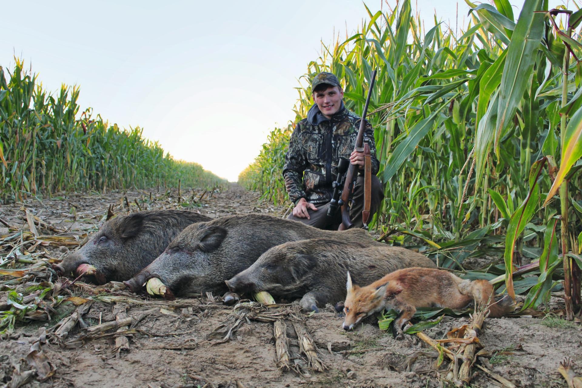 Waidmannsheil: auf drei Sauen und einen Fuchs beim Morgenansitz auf einer Maisschneise. Für die beiden Überläufer ist schnell ein Abnehmer gefunden, der 20 Kilogramm wiegende Frischling aber wird zu leckerem Spanferkel verarbeitet. Frischling als Spanferkel