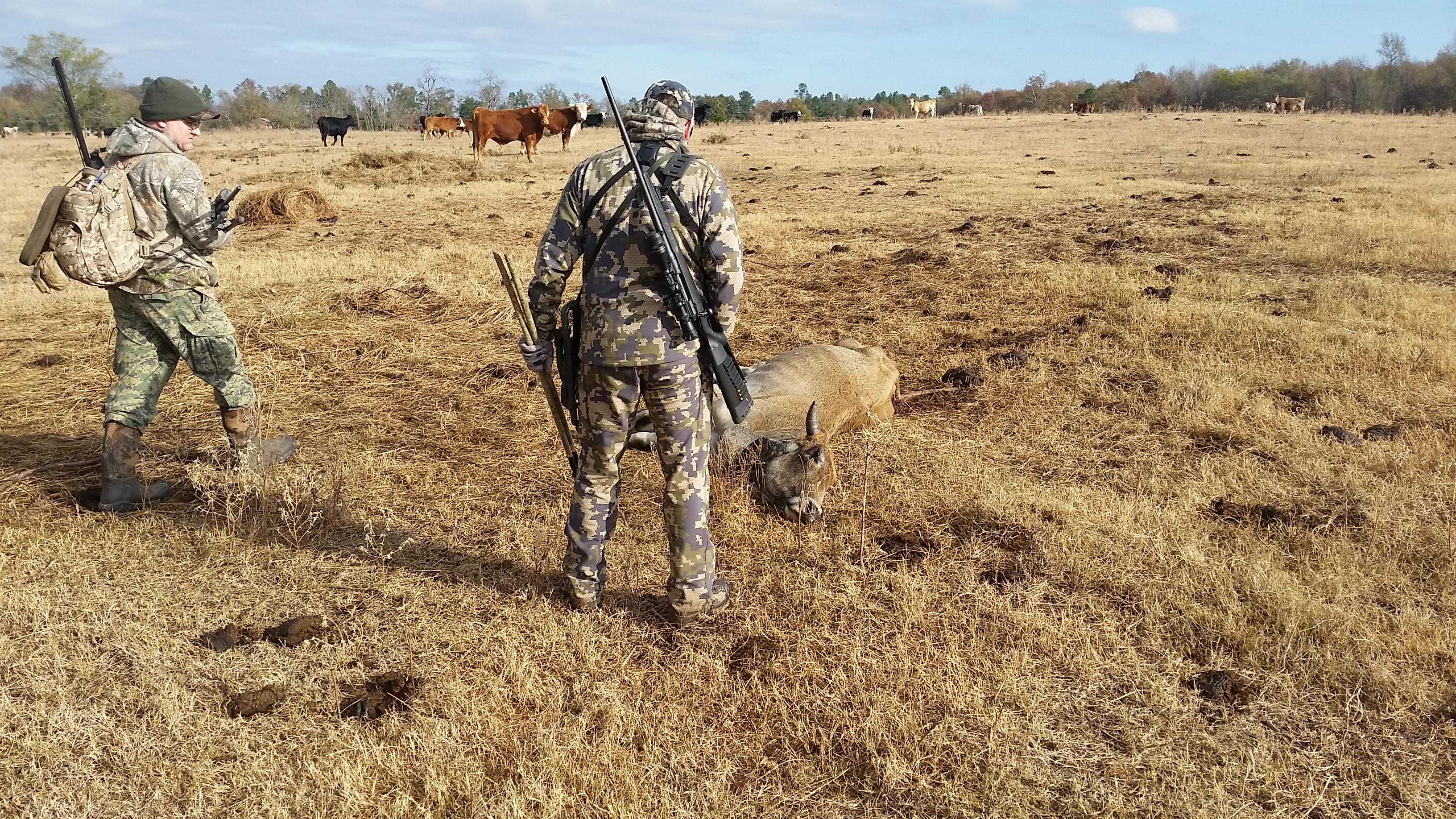 hier-begutachten-jeff-und-pauls-jagdfreund-ein-totes-rind-es-wurde-waerend-der-geburt-von-kojoten-getoetet-jagd-jagen-jaeger-jaegermagazin-wilddiebe-lockjagd-mit-jeff-johnson