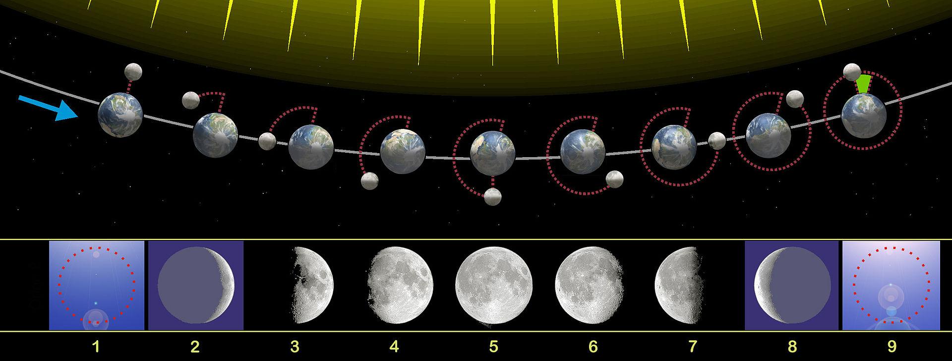 Mond Mondschein Mondhelligkeit Jagd Mondkalender Nachtjagd Ansitz