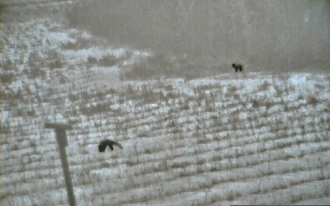 Die Wilddiebe - Mit der Nitehog Wärmebildkamera im Revier