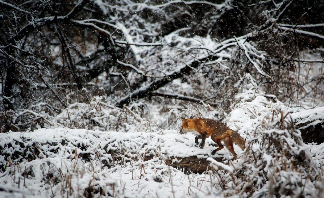 Ansitz Auf Fuchs Im Winter Tipps Gegen Die Kalte