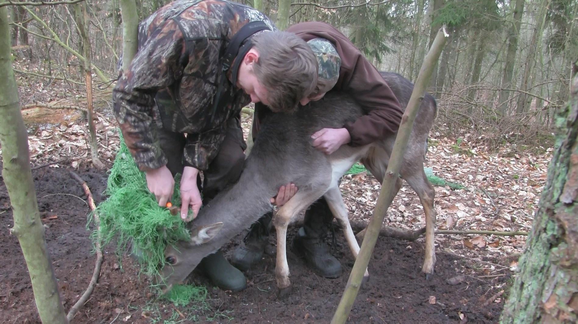Damknieper in Not Wilddiebe Reilmanns Pirsch Stangensammeln Stange Abwurfstange Jäger Jägermagazin