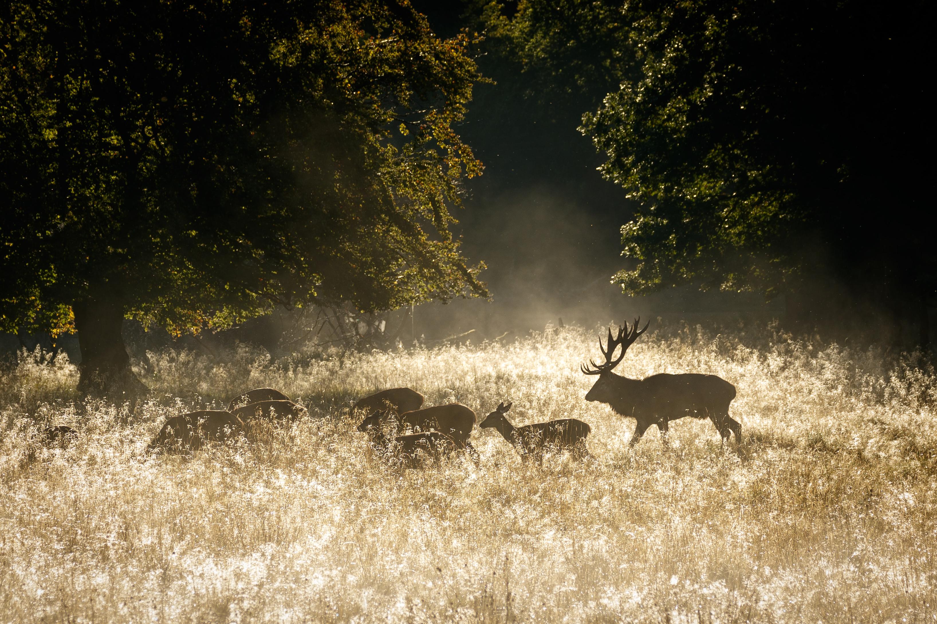 Jagderfolg Biologie Jagd jäger Jägermagazin