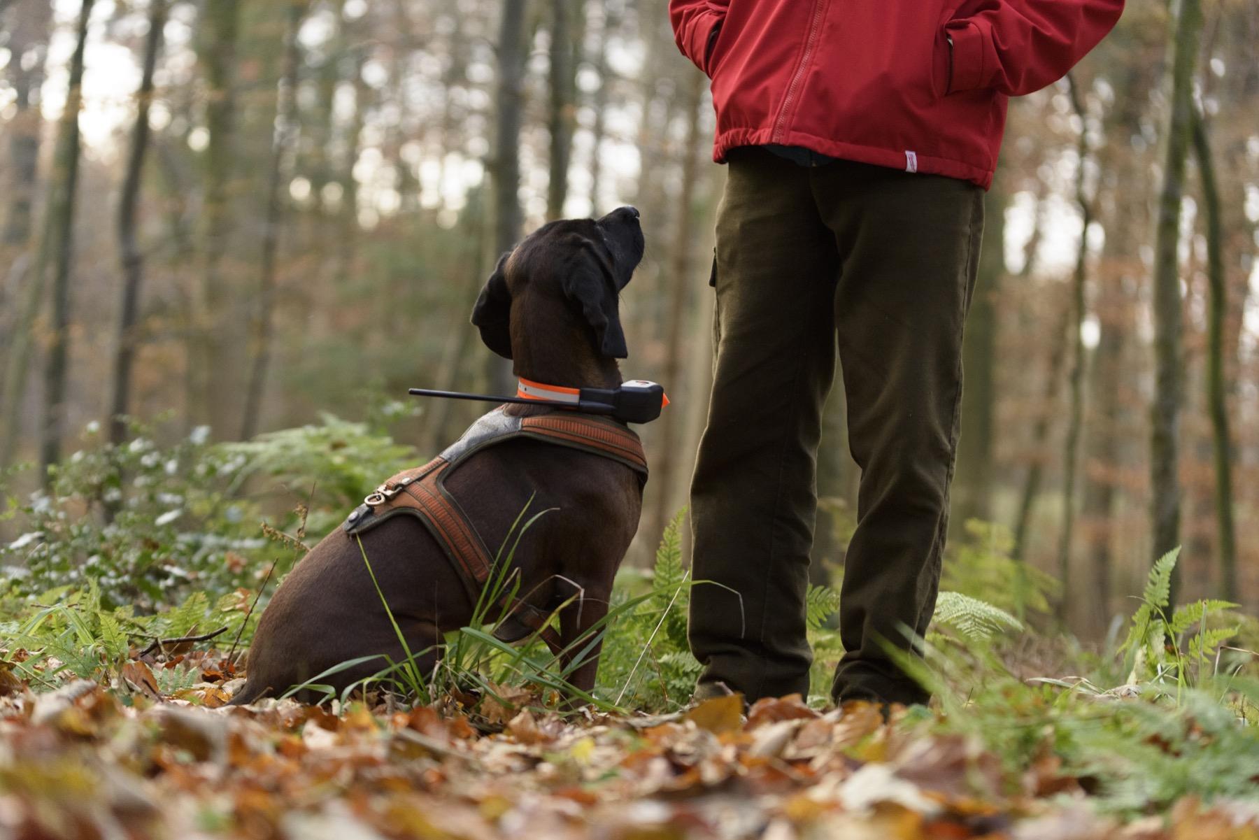 Hundeortung auf der Drückjagd - Der Tracker SUPRA im Einsatz