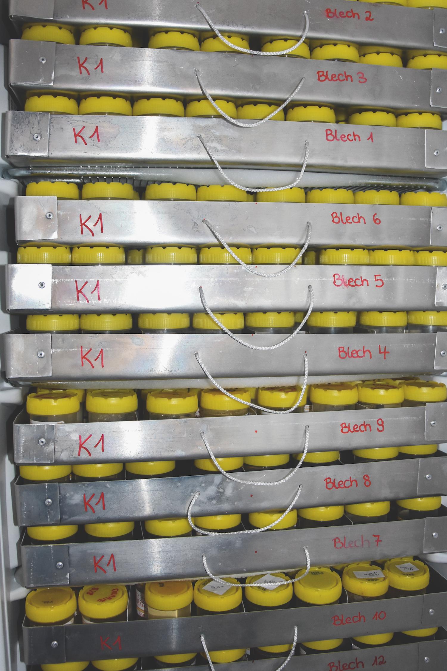 Probenaufbewahrung in einem Gefrierschrank am Senckenberg Institut.