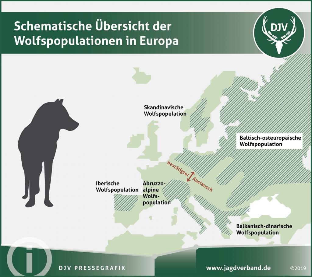 Die Landnutzer in Deutschland positionieren sich deutlich: Sie fordern eine Wolfsjagd, wie sie in Skandinavien praktiziert wird.
