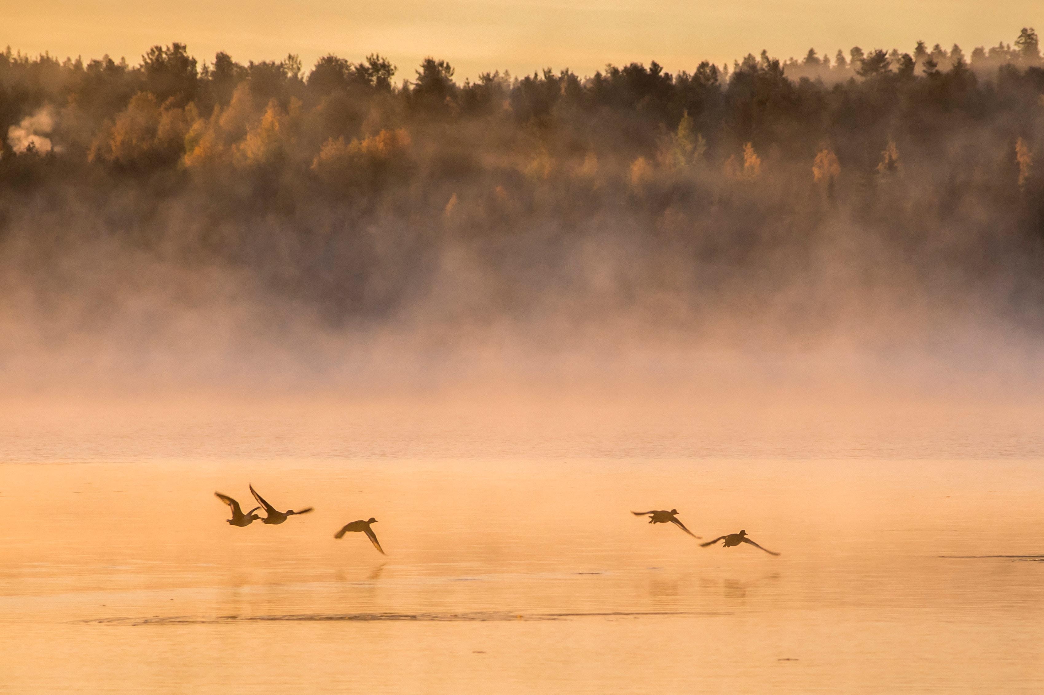 Einmal in Skandinavien Jagen. Der Traum vieler Jäger. Aber was, wenn es kein einmaliges Erlebnis sein muss? Ein Jagdgrundstück in Finnland ist die Lösung.