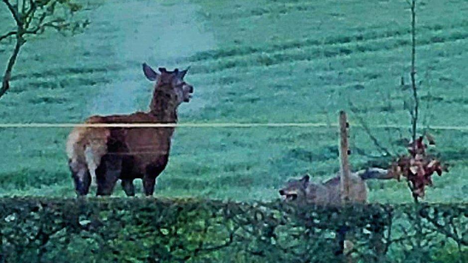 Im Netz sorgt das Wolfsvideo von Hünxe für ordentlich Zündstoff. Jetzt stören Wolfstouristen in Hünxe den jagdlichen Betrieb auf.