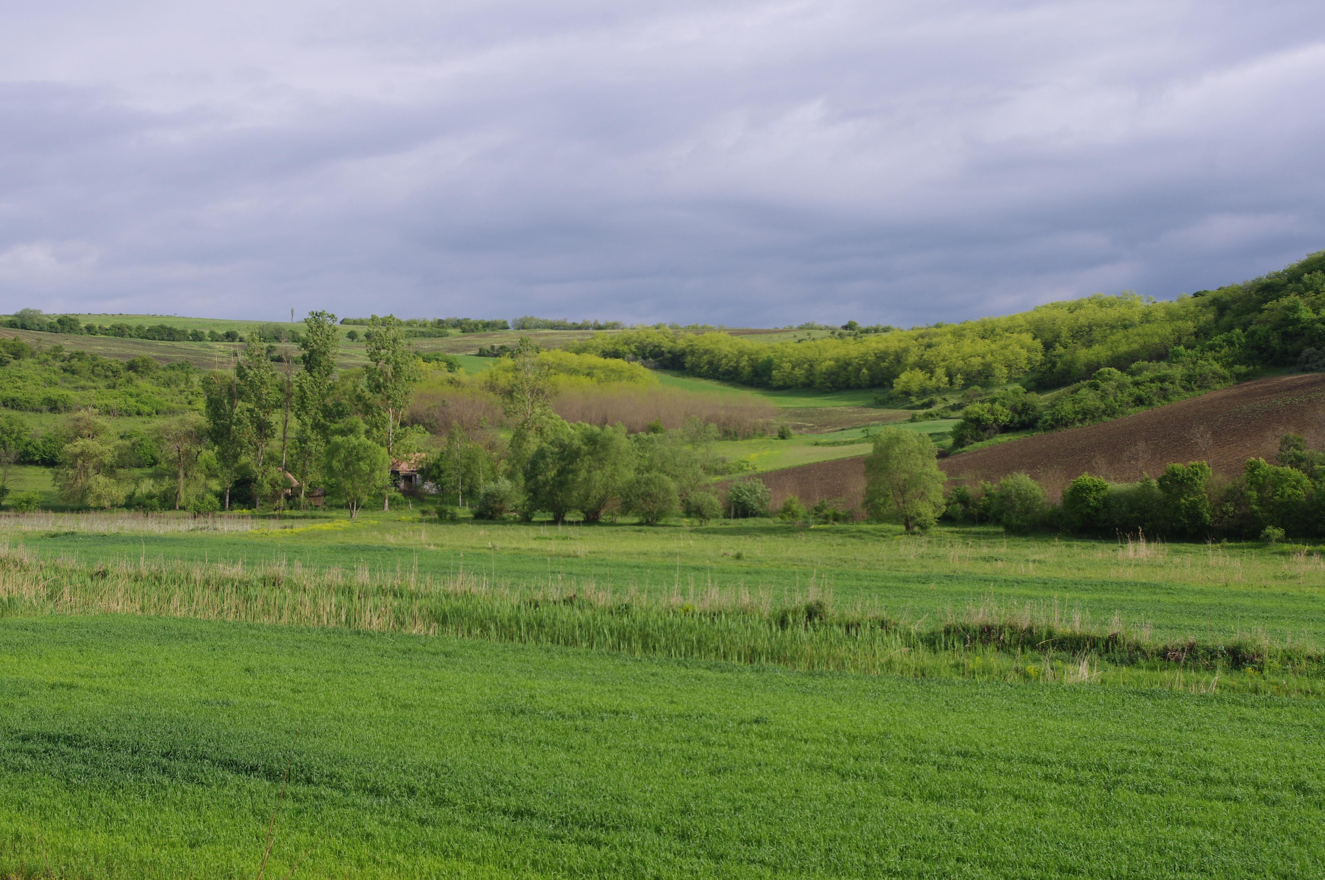 Rumänien: Ein Waldgebiet grenzt an ein Feld.